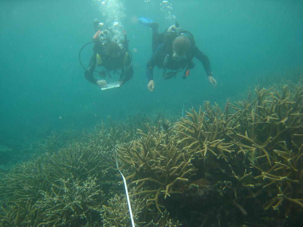 Two scuba divers check the health of the Great Barrier Reef