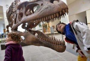 Tyrannosaur teeth