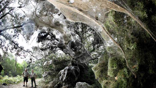 A large communal spider web near Dallas TX