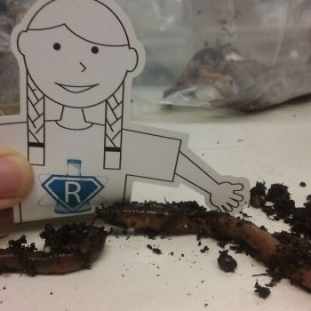 Flat Rosie learns about Earthworm Neurons