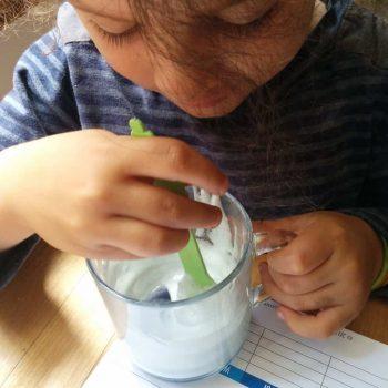 purple cabbage natural ph indicator lab testing