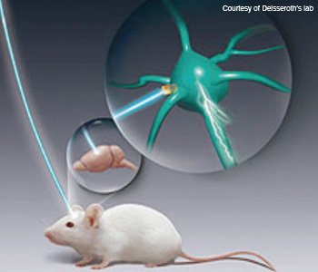optogenetics mouse