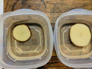 potato osmosis experiment