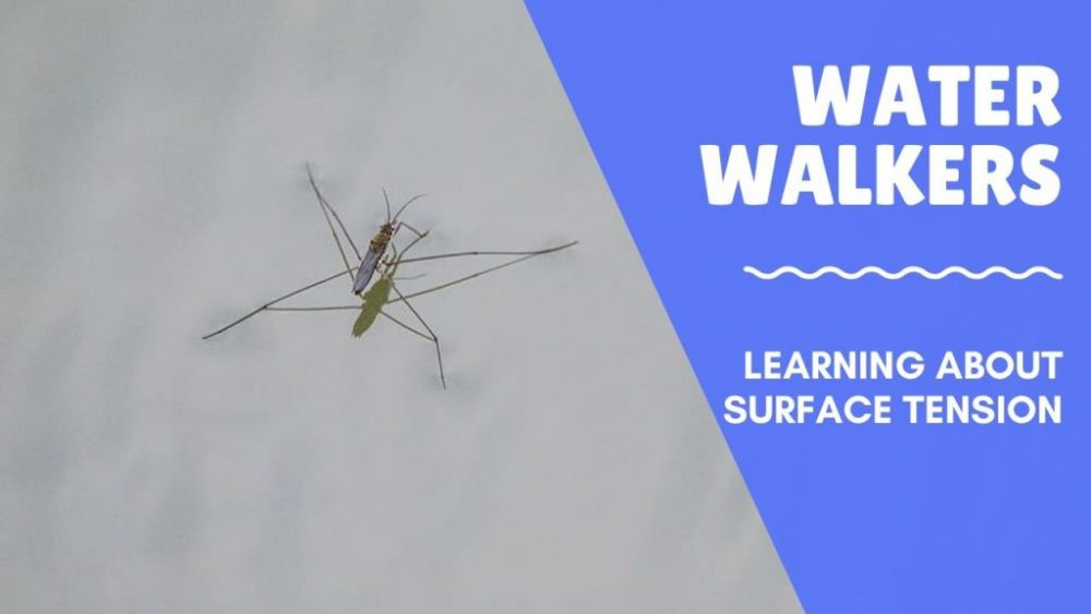 water walker surface tension activity
