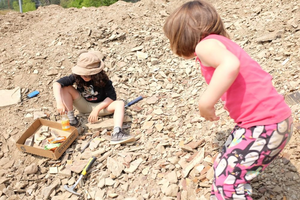 Digging fossils with kids at Stonerose in Republic WA