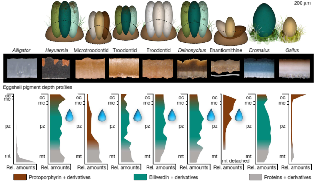 Dinosaur eggs in your backyard - evolution of color and spots in bird eggs - nature letters 2018