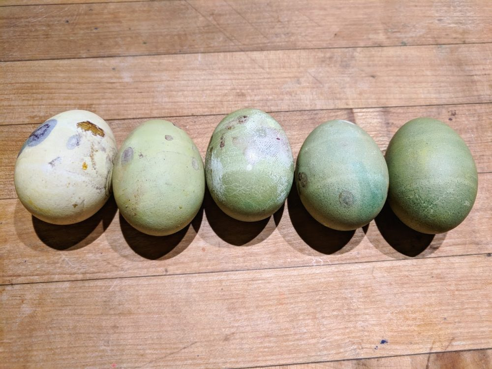 Easter egg decorating with natural easter egg dye over time