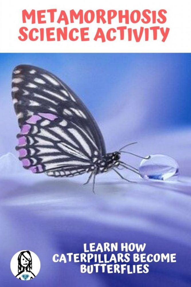 butterfly on purple background describing metamorphosis science as a kids science activity