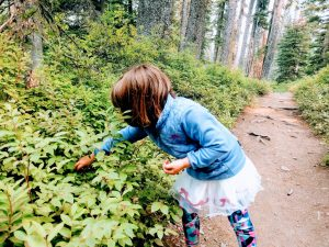 sinopah ferry edible plants at glacier national park things to do